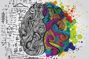 emisferi del cervello differenziati